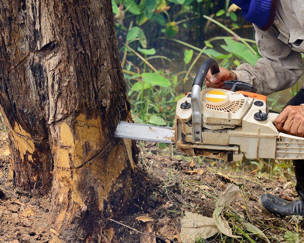 Houston Tree Service Experts