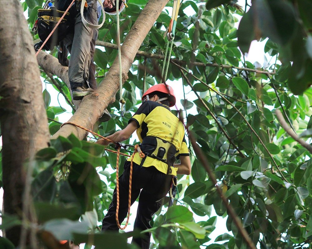 Pearland Tree Service Experts