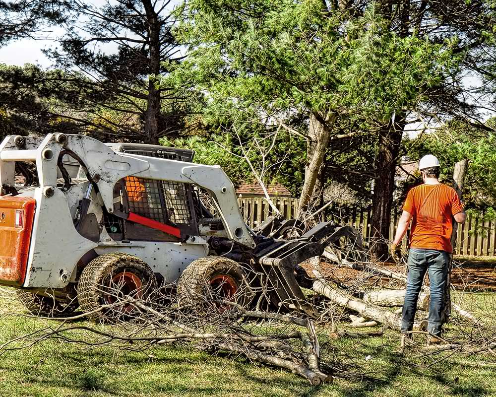 Tree Service Roseville - Arborist