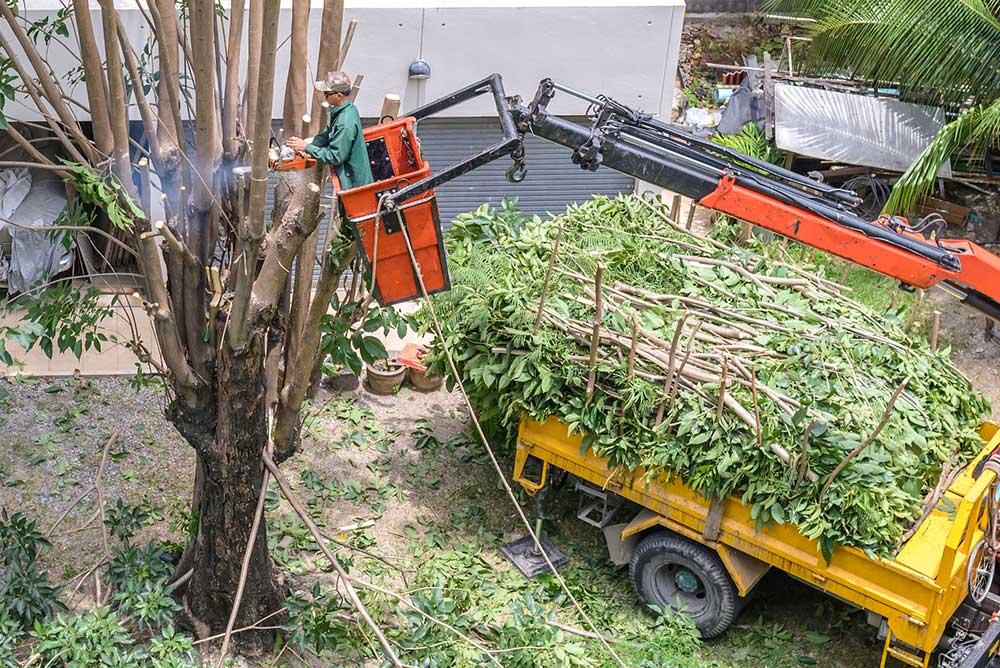 Tree Service Roseville - Tree Pruning
